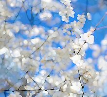 spring by mgirax