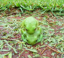 Froggy Love by overtherange