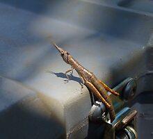 Juvenile Grasshopper by overtherange