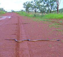 Black-headed Python by overtherange