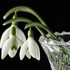Snow Drops in Vase by Lynn Gedeon