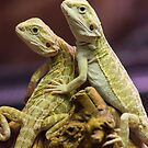 Lizards in Love by baneling