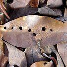 Holey Leaf by WildestArt