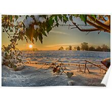 Sunrise through the Branches Poster