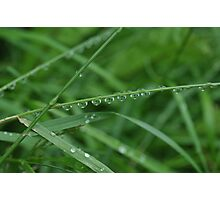 Raindrops... Photographic Print
