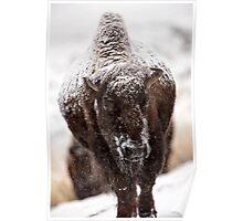 Bison Buffalo Wyoming Yellowstone Poster