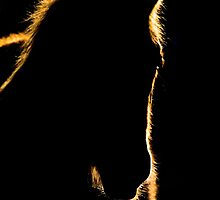 Sunset Horse Silhouette Canada by pictureguy
