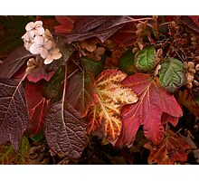 Autumn Echoes Photographic Print