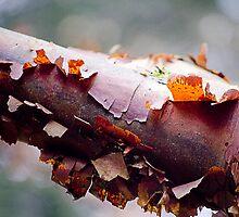 Tree bark by Mikhail31
