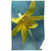 Vermont Trout Lily Poster