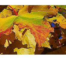 Shades of fall Photographic Print