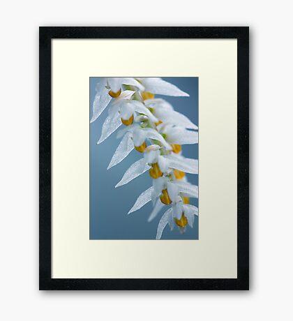 Diaphanous Framed Print