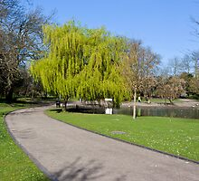 Weeping Willow tree in Hanley Park Stoke upon Trent by David Patterson