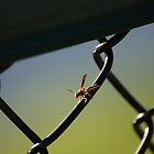 Hornet on Chain link fence by Scott Dovey