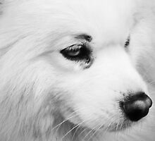 White Dog  by Forfarlass