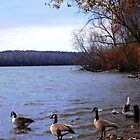 Autumn Geese by CanoeComsArt