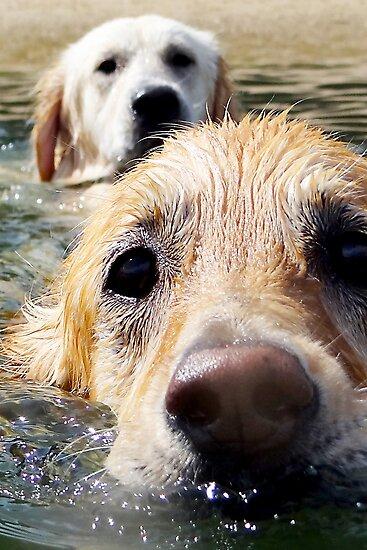 Just Keep Swimming by kraMPhotografie