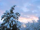 Snowy March Sunrise by Ginny York
