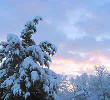 Snowy March Sunrise by Ginny York