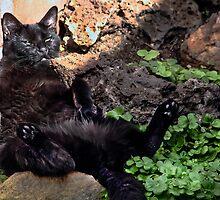Suki Sitting In the Sun by heatherfriedman