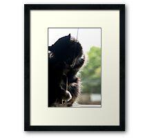 Window Cat Framed Print