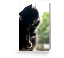 Window Cat Greeting Card