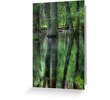 Swamp in the Cove Greeting Card