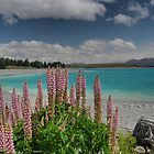 Pink on Pukaki  ( 1 ) by Larry Lingard-Davis