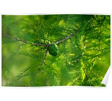 Restful Evergreen Branches and Fruit Poster