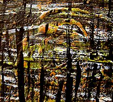scorched reeds.... scarred river by banrai