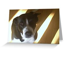Hello doggy Greeting Card