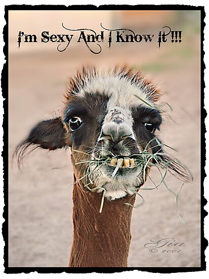 """"""" I'm Sexy And I Know It"""" by Gail Jones"""