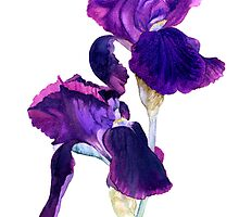 Purple Sable Iris by Jacki Stokes