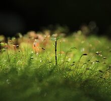 Seedling in Moss by Jenny Norris
