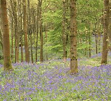 Bluebells by Greg Artis