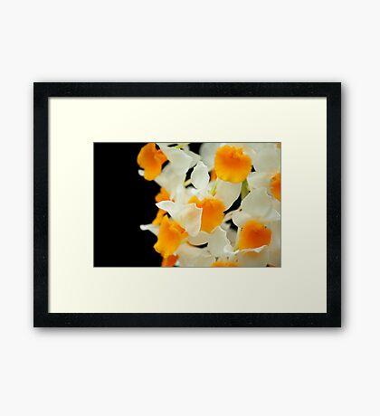 Egg Yolk and White Framed Print