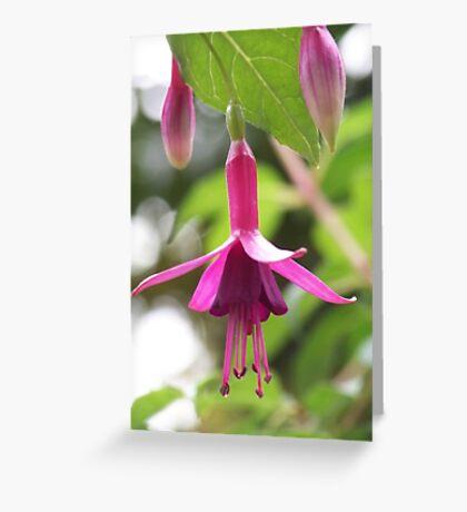Fuschia Greeting Card