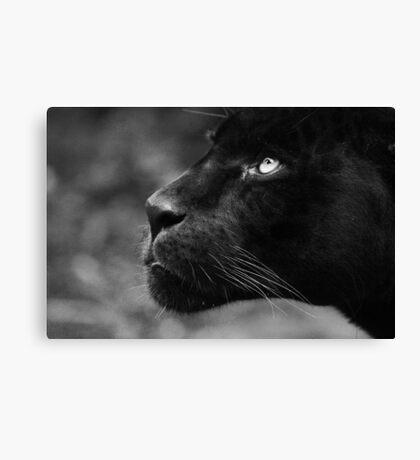 Panther  Canvas Print