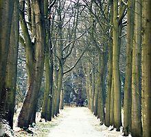 winter walk by WildatHart