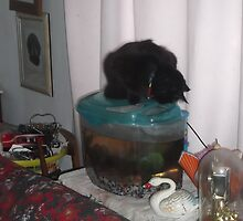 Cat atop fish tank -(260313)- Digital photo by paulramnora