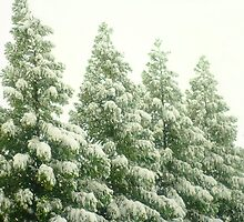 Cedar Trees In the Snow by Arteffecting