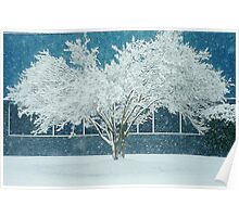 White Snow Covered Tree and Blue Poster