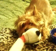 How To Get A Lazy Dog To Exercise: Tie Favorite Toy to Bedpost by Charldia