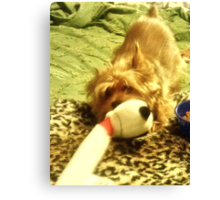 How To Get A Lazy Dog To Exercise: Tie Favorite Toy to Bedpost Canvas Print