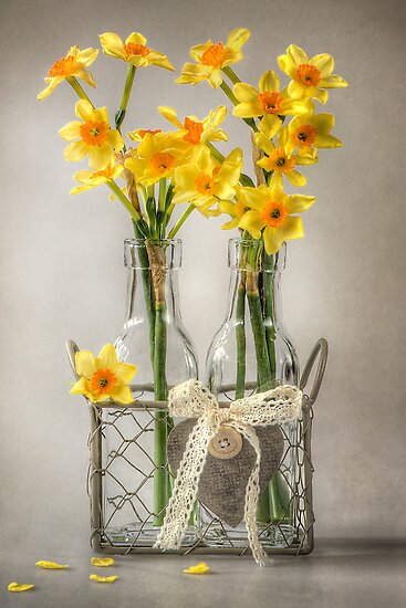 Mini Daffs by Jacky Parker