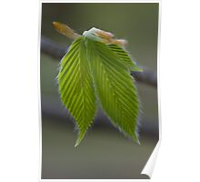 New Leaves Poster