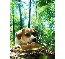Sunny, the Best Doggy in the Whole Wide World Photographic Print