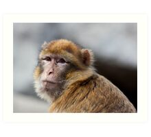 Macaque portrait Art Print