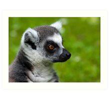 Lemur portrait Art Print