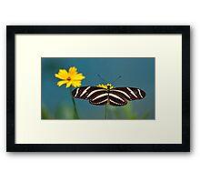 Zebra Longwing (Heliconius charithonia) Framed Print